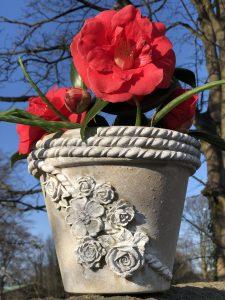 A WoodUbend Plant pot
